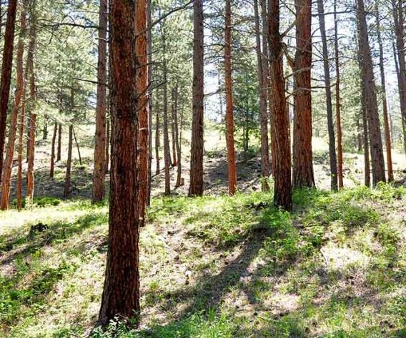 ofallon park trails header