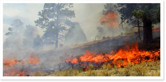 Medano Fire in Great Sand Dunes National Park - Photo by NPS/David Eaker