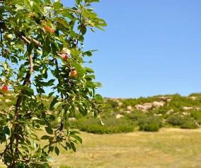 glendale farm trail douglas county open space header