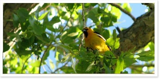 Bird along the Highline Canal Near Lucent Blvd
