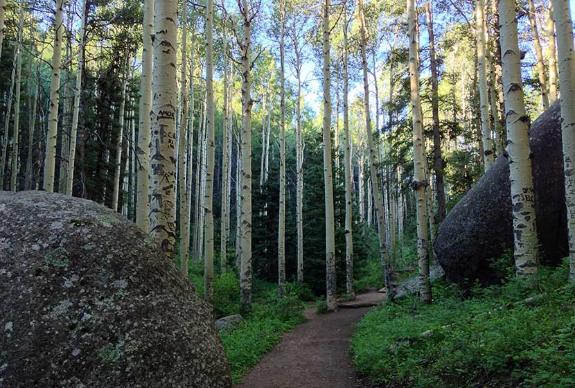 devils_head_aspens_colorado_hike