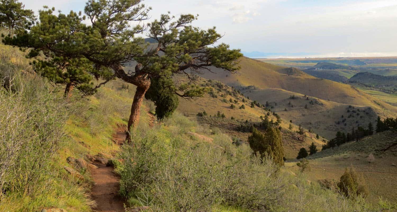 Mt. Galbraith Loop via the Cedar Gulch Trail