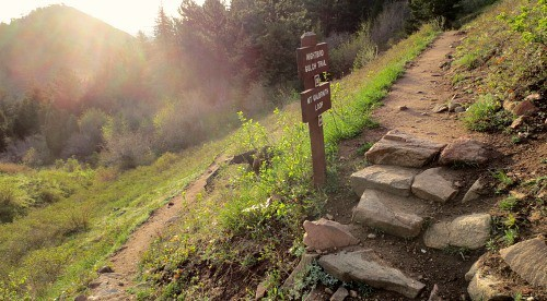 Mount Galbraith trail split