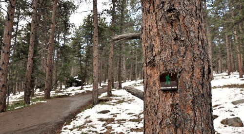 Enchanted Mesa Boulder Colorado Forest