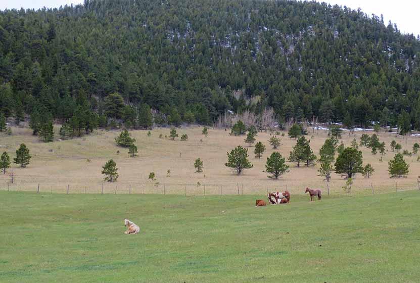 Centennial Cone Hike 02