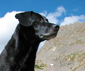 black dog in front of a mountain in Colorado