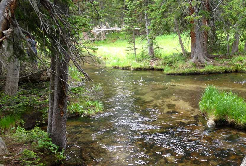 creek below timberline falls