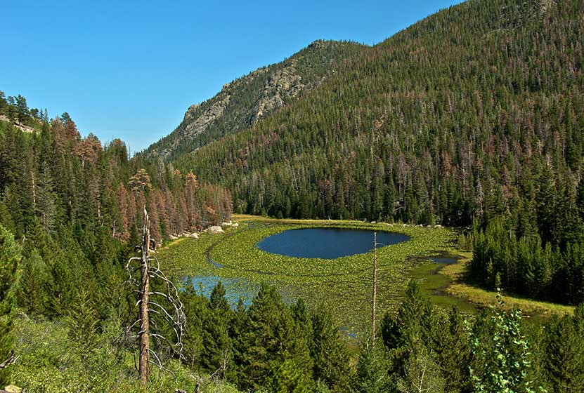Cub Lake in Rocky Mountain National Park - Day Hikes Near Denver Map Of Rocky Mountain National Park Snowshoe Trails on big cypress national preserve trail map, hawaii volcanoes national park trail map, canada rocky mountains on map, park city mountain resort trail map, rio grande national forest trail map, white river national forest trail map, colorado national monument trail map, san isabel national forest trail map, pagosa springs trail map, chickasaw national recreation area trail map, cuyahoga valley national park trail map, kings canyon national park trail map, grand mesa national forest trail map, dead horse point trail map, el yunque national forest trail map, angelina national forest trail map, bell mountain wilderness area trail map, collegiate peaks trail map, white sands national monument trail map, national hiking trails map,