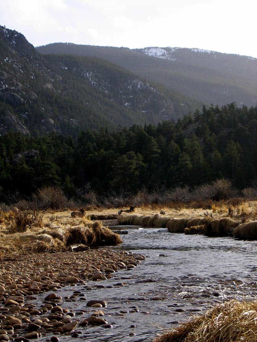 01-Moraine-Park-Rocky-Mountain-National-Park