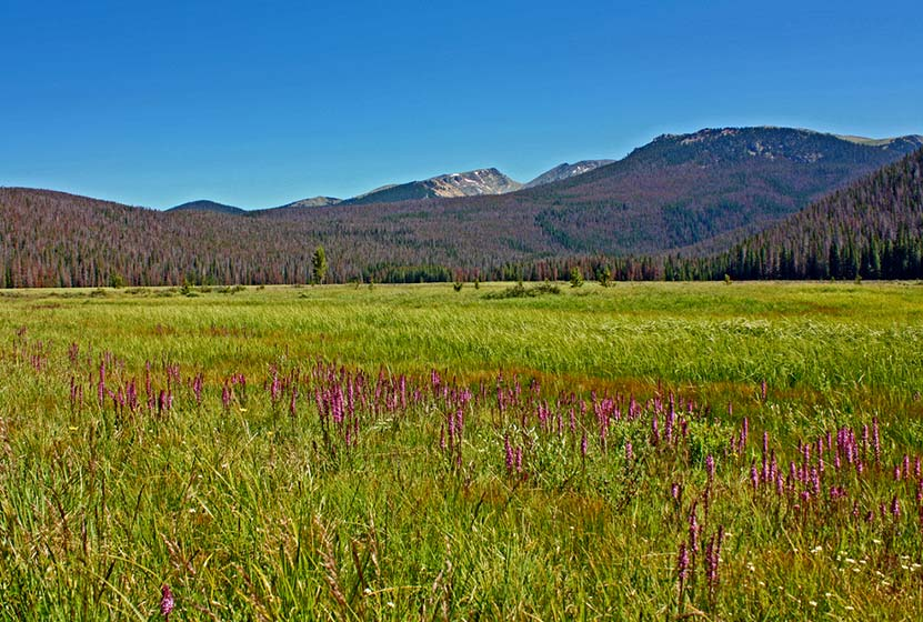 big-meadows-rocky-mountain-national-park-cc