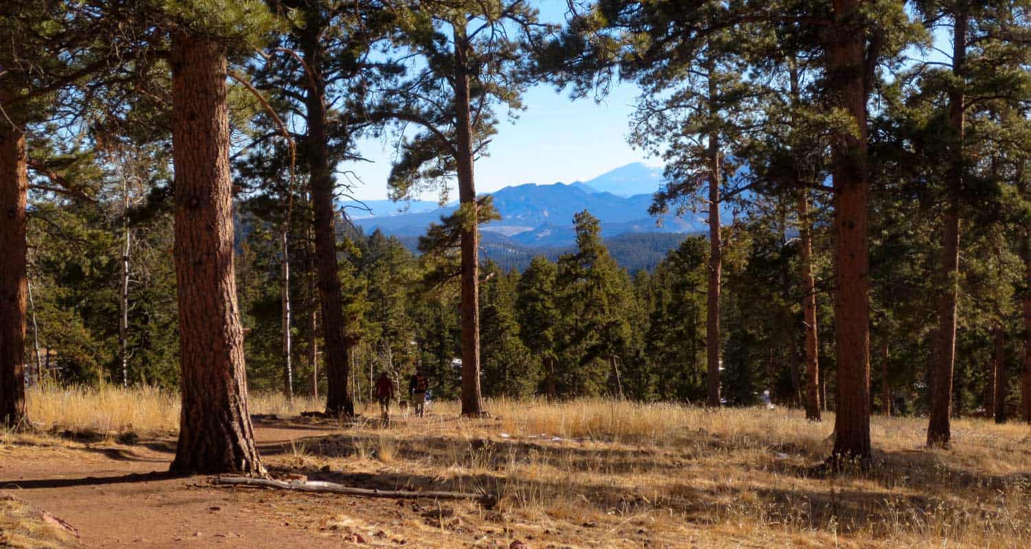 two hikers with dog on trail in staunton state park colorado with ponderosa pine trees in foreground and pikes peak in background