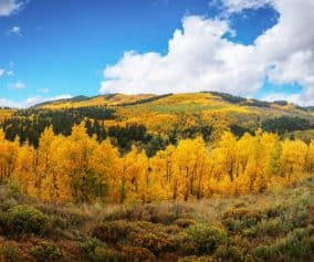 Kenosha Pass Aspen Trees gold orange with mountain in background full of fall colors