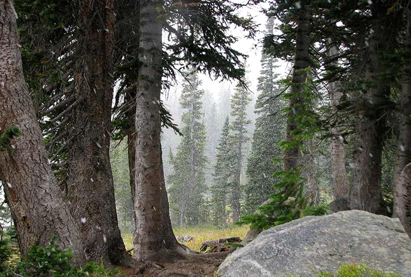 forest near diamond lake with snow and fog