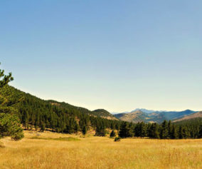 golden meadow with mountains in distance at Heil Valley Ranch Near Boulder Colorado
