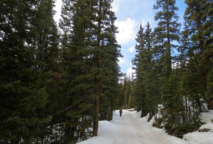 forested snow covered trail along bulter gulch trail