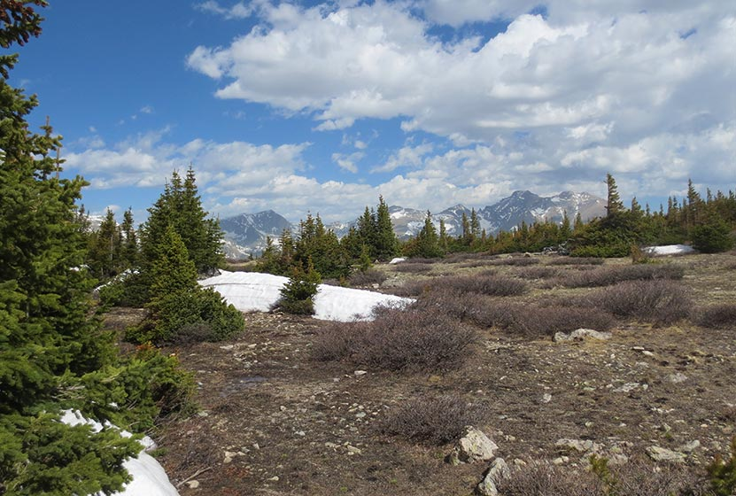 high mountain tundra with peaks of wild basin of rmnp in background along st. vrain mountain trail in colorado
