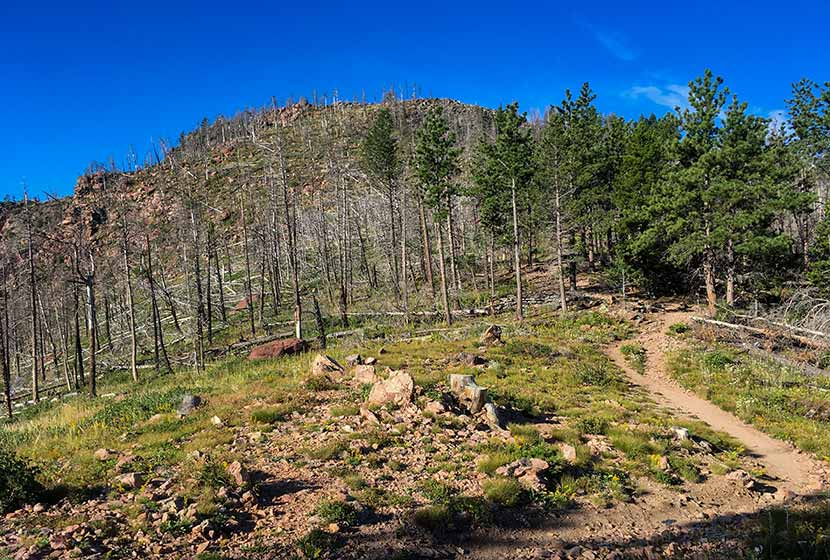trail through burn area leading up to bear peak in the flatirons near boulder colorado