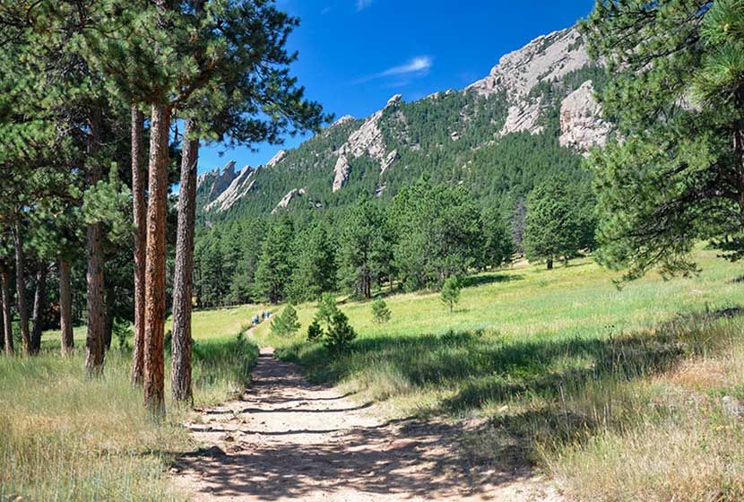 meadows and ponderosa pine along mesa trail in the south mesa area of the flatirons south of boulder colorado with the flatirons in the background
