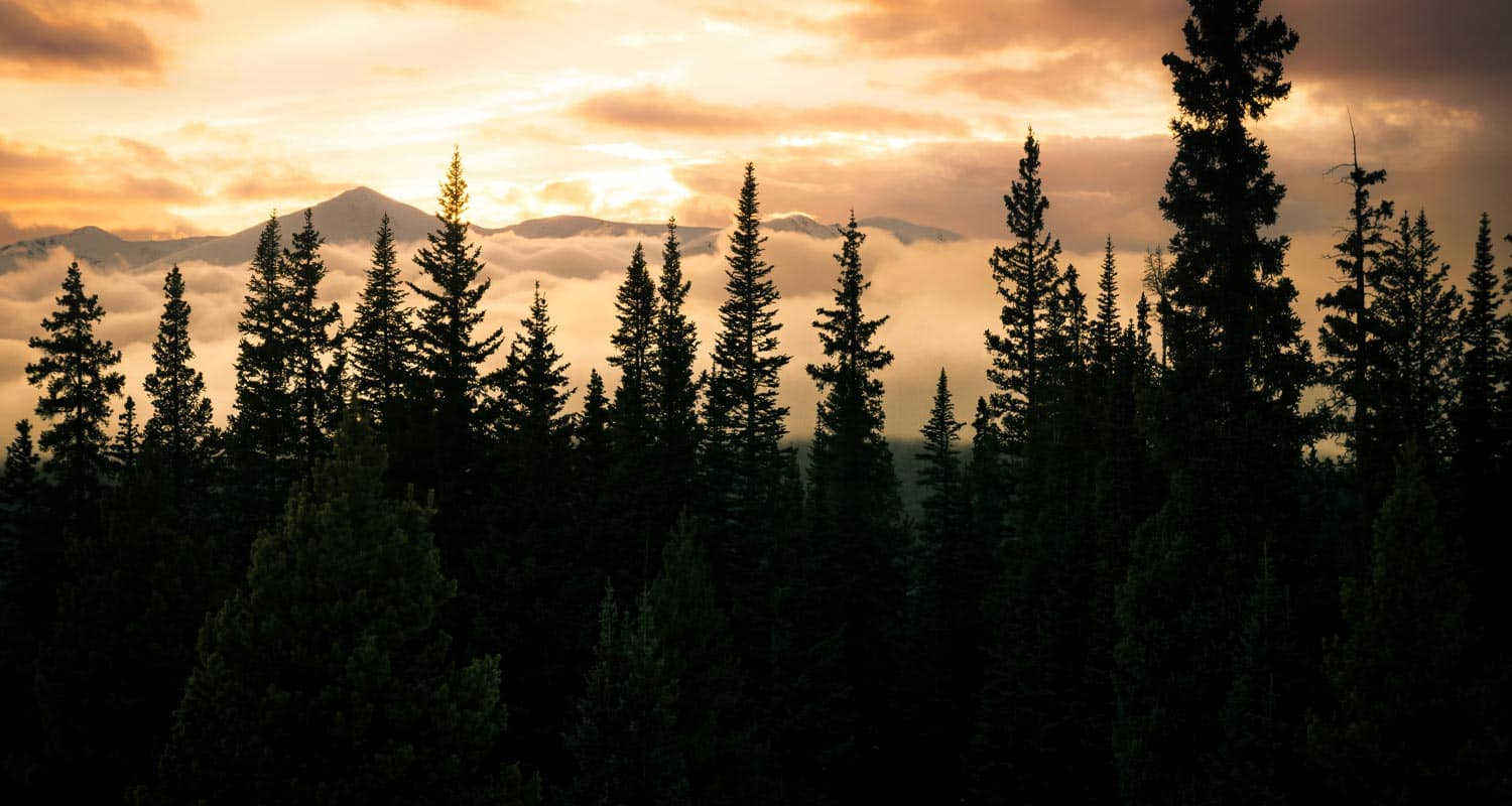 evergreen trees dark in foreground with sunset and distant mountain beyond the clouds