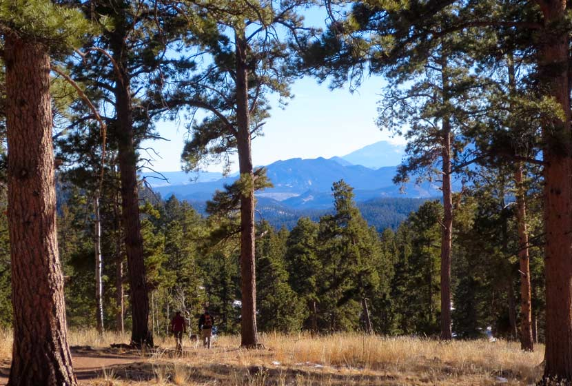 ponderosa pine trees in foreground with foothills and pikes peak in background with hikers and dog top 10 hikes near denver