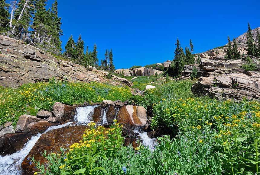 wildflowers along stream with trio falls in the distance rocky mountain national park