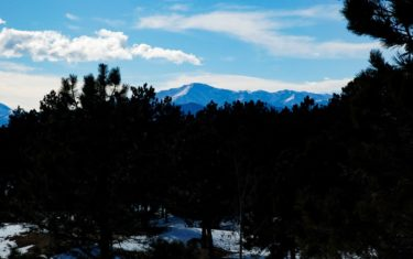 pikes peak in distance from fox run park with evergreen trees in foreground
