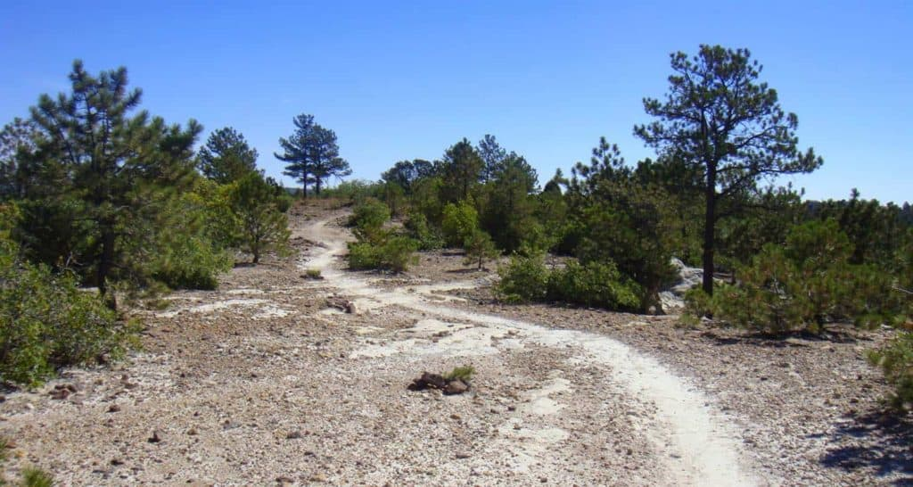 start of rocky trail with conifer trees at ute valley park in colorado springs