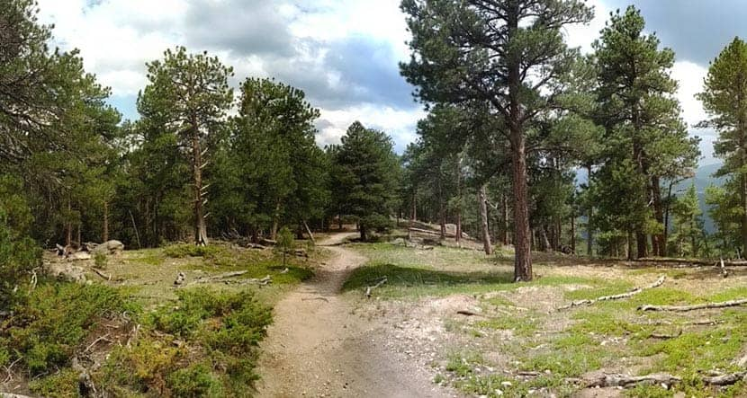 trail with evergreen trees on way up to bergen peak on hike near evergreen colorado